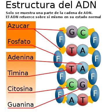Grupo 15 de la tabla peridica familia del nitrgeno qumica en grupo 15 de la tabla peridica familia del nitrgeno qumica en casa urtaz Choice Image