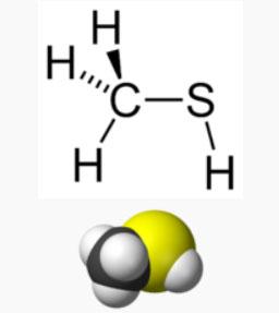 metanotiol o metilmercaptano