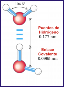 agua enlace covalente